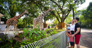 Pros and Cons of Zoos